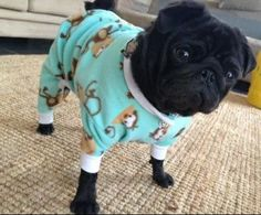 Dog pug clothes oncey MADE TO ORDER on Etsy, $27.51