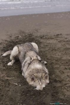 Digging Is So Fun - http://www.funnydogsite.com/pictures/Digging_Is_So_Fun.htm?utm_source=rss&utm_medium=Sendible&utm_campaign=RSS