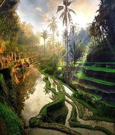 """""""Somos feitos da matéria dos sonhos"""". Shakespeare ・・・  @dotzsoh #repost ・・・ #paraveromundo #Ubud #Bali #Indonesia #Asia #Natureza #nature #beautiful #amazing #viagem #turismo #travel #tour #igtravel #instatravel #instapassport #travelgram #wanderlust"""