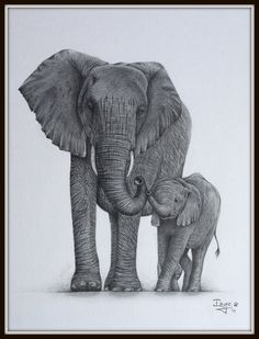 Mommy & baby elephant