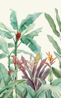 Green Vintage Tropical Minimalist Wallpaper Mural Welcome fresh tropicals into your space full of st Plant Wallpaper, Tropical Wallpaper, Botanical Wallpaper, Illustration Botanique, Plant Illustration, Vintage Botanical Illustration, Cute Wallpapers, Wallpaper Backgrounds, Impressions Botaniques