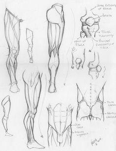 Anatomy of men's leg