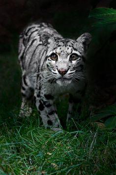 Baby leopard cub ~ Sue Demetriou ✿⊱╮