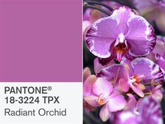 Pantone's Radiant Orchid is 2014's Color of the Year