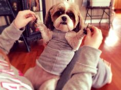 No Sew Five Minute Dog Sweater - Tap the pin for the most adorable pawtastic fur baby apparel! You'll love the dog clothes and cat clothes! Small Dog Coats, Small Dog Sweaters, Small Dogs, Shih Tzu, Dog Coat Pattern, Crochet Dog Sweater, Crochet Dog Clothes, Dog Jumpers, Dog Pajamas
