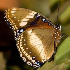 Golden Butterfly #gold