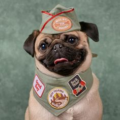 Figure out even more info on pug. Visit our website. Cute Pug Puppies, Cute Dogs, Doggies, Funny Animal Pictures, Cute Funny Animals, Pugs In Costume, Animals Kissing, Baby Pugs, Funny Animals