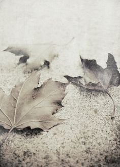 There is a rhythm inside a year of time, like a great mainspring that keeps it ticking from spring to summer to fall to winter. Poetry Photography, Autumn Photography, Autumn Day, Autumn Leaves, Autumn Nature, Soft Autumn, Late Autumn, Fallen Leaves, Autumn Harvest