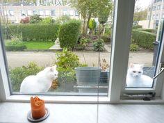 Les chats soeurs
