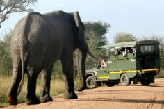 Driving in my own vehicle or tapping into the considerable knowledge of a safari guide begs consideration for a day visit to Kruger National Park Kruger National Park, National Parks, Safari Game, Quad Bike, Self Driving, Once In A Lifetime, South Africa, Tourism, Activities