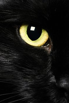 """""""In a cat's eye, all things belong to a cat."""" --British Proverb Tap the link for an awesome selection cat and kitten products for your feline companion! Beautiful Cats, Animals Beautiful, Cute Animals, Baby Animals, Funny Animals, Crazy Cat Lady, Crazy Cats, I Love Cats, Cool Cats"""