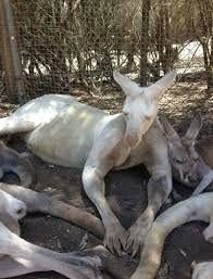 albinos animals - Buscar con Google