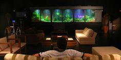 Cientistas estudam o efeito calmante de observar peixes em aquário - AquaA3 - Aquarismo