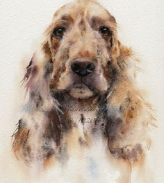 Cocker spaniel in watercolour by artist Jane davies available to purchase as an limited edition print.