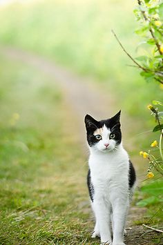 Beautiful black and white kitty.