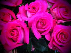 Beautiful equador roses !!!