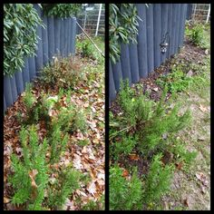 Wo war das Beet und wo der Rasen? Gartendimensionen wiederfinden:-) #laub #gartenräume #gartenreich #grünerdaumen #köln #bergisch #rösrath #overath