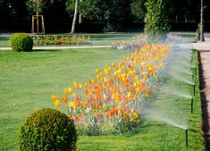 At Gabino Lawn & Landscaping, we are committed to provide the best landscaping, irrigation, fence installation and many more services in Oklahoma City. Give your yard a different look with our experts. Best Sprinkler, Sprinkler Repair, Lawn And Landscape, Landscape Design, Irrigation Repair, Thing 1, Water Management, Green Lawn, Green Garden