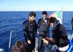 O Palhetas na Foz: Marinha Portuguesa e CRAM de Quiaios devolveram ao...