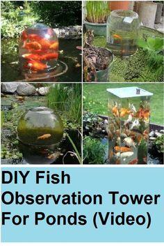 DIY Fish Observation Tower For Ponds (Video) DIY Fish Observation Tower For Ponds (Video) DIY Fish Observation Tower For Ponds The post DIY Fish Observation Tower For Ponds (Video) appeared first on Dress Models.