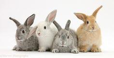 Slikovni rezultat za 4 rabbits