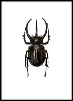 Plakater med insekter og dyr |Plakater med sommerfugle og guldsmede | desenio.dk