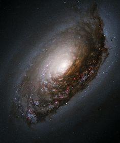 """Galáxia """"NGC 4826"""". Pertence à """"Constelação da Cabeleira de Berenice"""".                                                                                                                                                                                 Mais"""