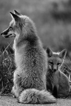 mama #fox and kit