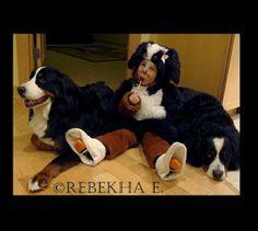 Bernese-mountain-dog-costume