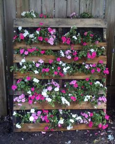 This is my pallet garden wall. Might also plant maybe strawberry plants in some of the rows between the flowers?
