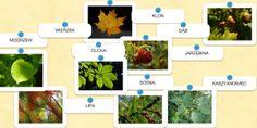 Rozpoznawanie drzew Multimedia