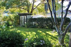 Traditional Landscape/Yard with Fence, 1 gal. Wintergreen Boxwood, St. Augustine 3 in. Grass Plugs (2 - 18-Pack Trays)