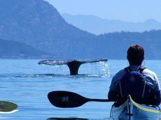 Kayaking in Washington San Juan Islands!