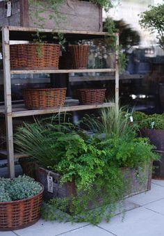 På lördag medverkar jag i nyhetsmorgon på Tv 4. Jag kommer att tipsa om växter som trivs i den skuggigare delen av trädgården och på balkongen. När jag var i New York förra året såg jag en helt fantastisk balkong som var klädd i bara grönt. Bland annat hängsparris som svävade ut över räcket. Garden Shop, Dream Garden, Shops, Garden Inspiration, Container Gardening, Garden Landscaping, Potting Benches, Greenhouse Ideas, Landscape