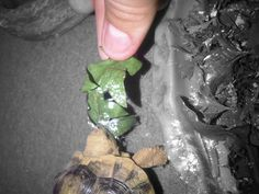 Feeding my tortoise