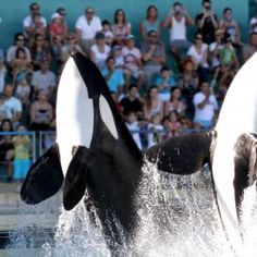 Marineland spectacles d'animaux, les animaux font le spectacle