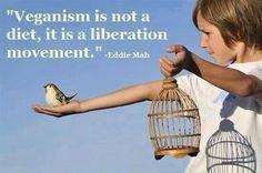 Liberation Movement