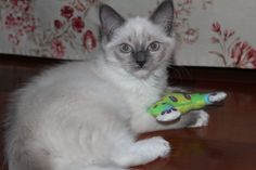Lucy with her toy