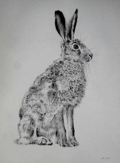 lièvre au repos - Dessin,  30x40 cm ©2014 par Frederic Goze -            lièvre fusain dessin