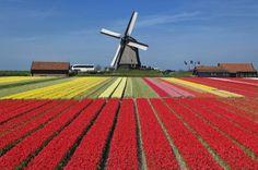 Countus Tulpenfestival, Noordoostpolder, Holanda