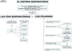 https://luisamariaarias.wordpress.com/2012/12/02/el-sistema-respiratorio-castellano/