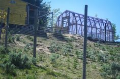 Building a chicken run (And why I hate free-range chickens) | The Elliott Homestead (.com)