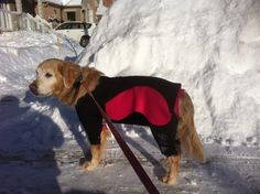 Wondering what the temperature might be?enough for me to wear the balaclava!  www.practicaldog.ca