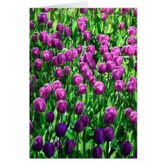 Beautiful Purple Spring Tulip Flowers Card