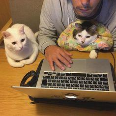 ただいま〜♩ お出迎えないと思ったら…。 男子は真剣に、ミーティング中やったw #八おこめ #ねこ部 #cat #ねこ #ミーティング