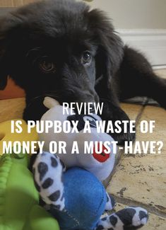 Here is my unsponsored review of PupBox ( @pupbox ) - a monthly subscription service that brings treats, toys, accessories and more right to your doorstep to help you raise and train your puppy. Training Your Puppy, Training Tips, Best Puppies, Monthly Subscription, Pet Store, Thing 1 Thing 2, Dog Treats, Dog Toys, No Time For Me