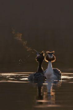 Ben Hall's amazing wildlife photography