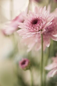 Chysanthemum by Julia Carvalho on 500px  )