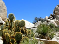 Joshua Tree National Park  #reiseblog #roadtrip #usa #california #travelblogger