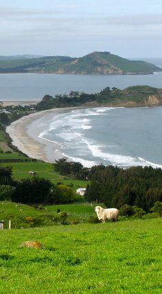 Karitane, a small seaside settlement in Otago, South Island, New Zealand New Zealand Beach, New Zealand Travel, Places Around The World, Around The Worlds, Cities, South Island, Beautiful Beaches, Beautiful World, Scenery